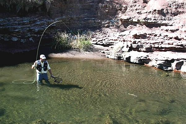 Fly fishing for Lesotho rainbow trout