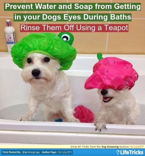 66 best dogs hacks tricks and tips images on pinterest dog dog grooming prevent water and soap from getting in your dogs eyes during baths solutioingenieria Gallery