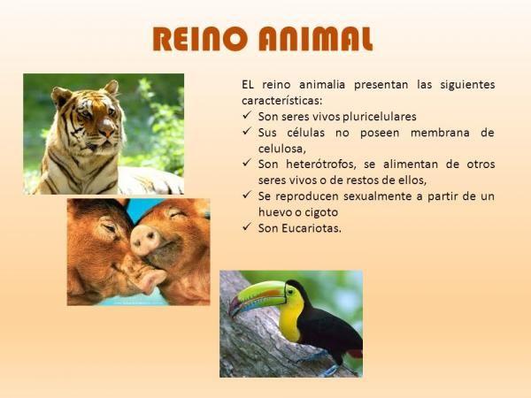 Las Principales Características Del Reino Animal Resumen Corto Reino Animal Reproduccion De Los Animales Adaptaciones De Los Animales