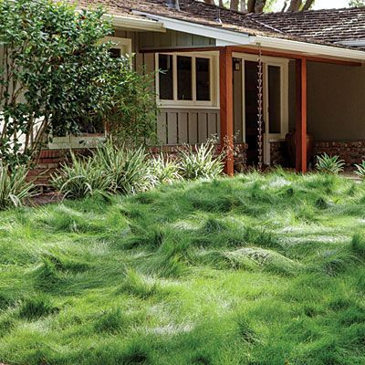 Fescue - Drought Tolerant Front Yard Lanscaping - Sunset. For the side yard.