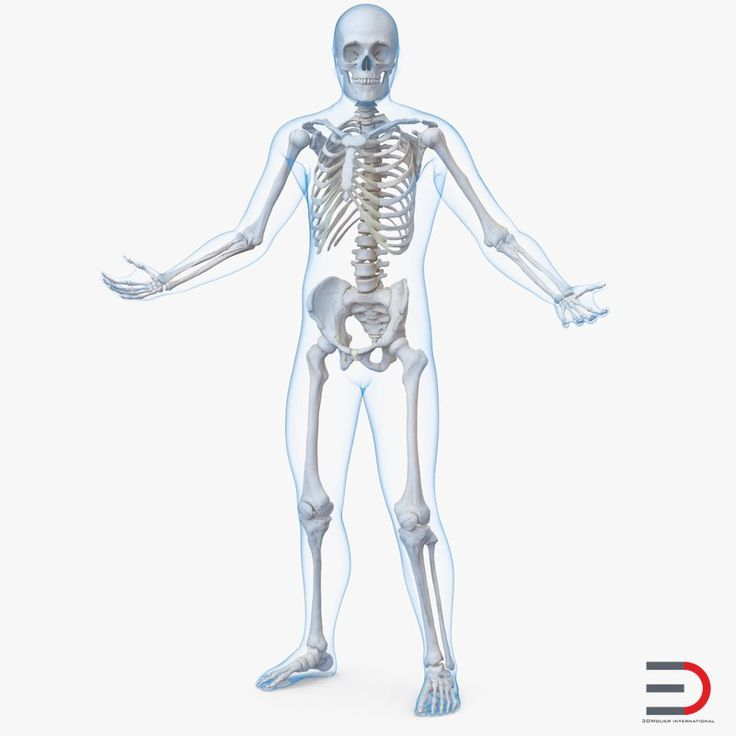 Male Body with Skeleton Rigged 3D model
