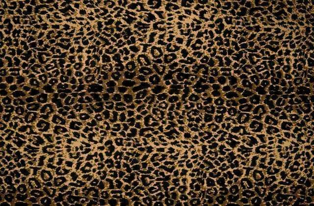 Leopard Print | Cheetah Print Wallpapers and Cheetah Print Backgrounds 1 of 1