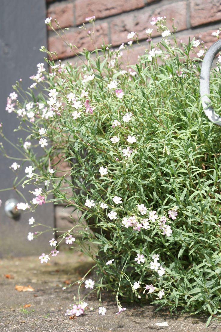 Mooie kleine tere bloemetjes in pot!