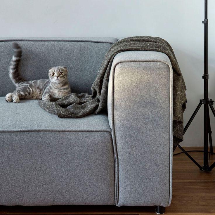 На одном сером-сером диване спал #серый-серый #котэ :) #Интерьер и кот @za_bor_architects #cat #interior #decoration #котики #galleria_arben