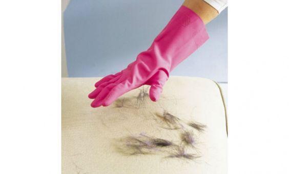 ¿Cómo quitar el pelo de perro?