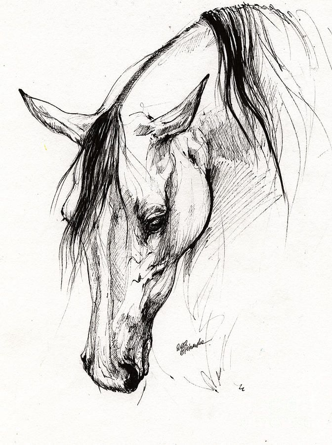 Arabian Horse Ink Drawing 6 Drawing by Angel  Tarantella