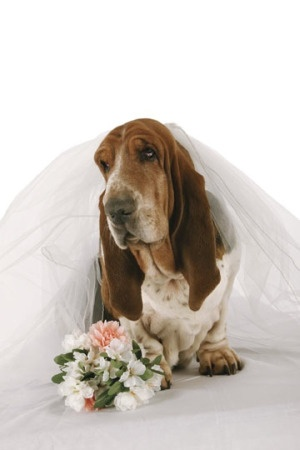 wedding RSVP cards:    ____ Wife says we have to.  ____ I hear there's free booze.  ____ Only coming for the little hotdogs.  ____ Have better plans that weekend.  ____ Who are you two, anyway?