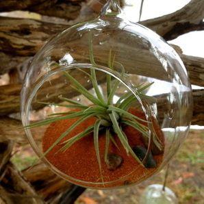 Glass globe garden