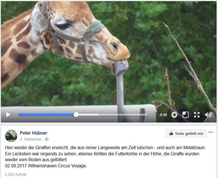 Wildtierverbot in Zoo und Zirkus vs. Haustierhaltung