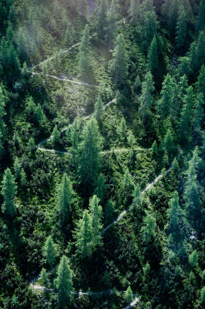Take more of the zig-zag paths in life #forest #nature