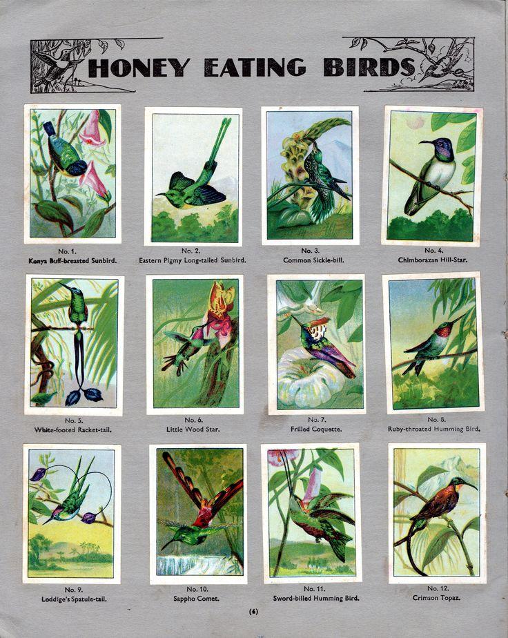 NESTLE': Wonders of the World (1932 - Honey Eating Birds)