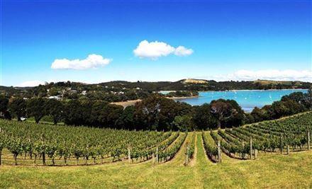 Waiheke Wine Tours