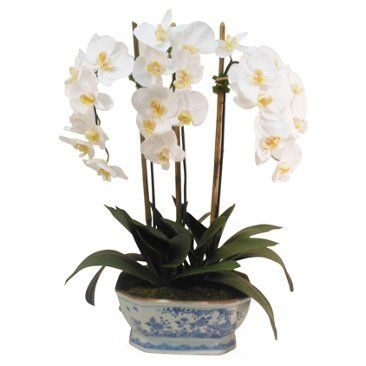 Orchid in Pot, White and blue