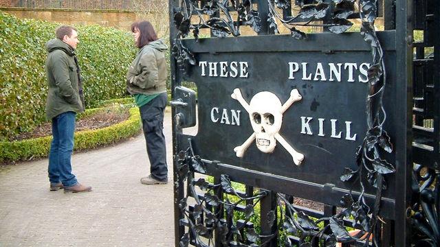 Alnwick's treacherous Poison Garden, Northumberland.