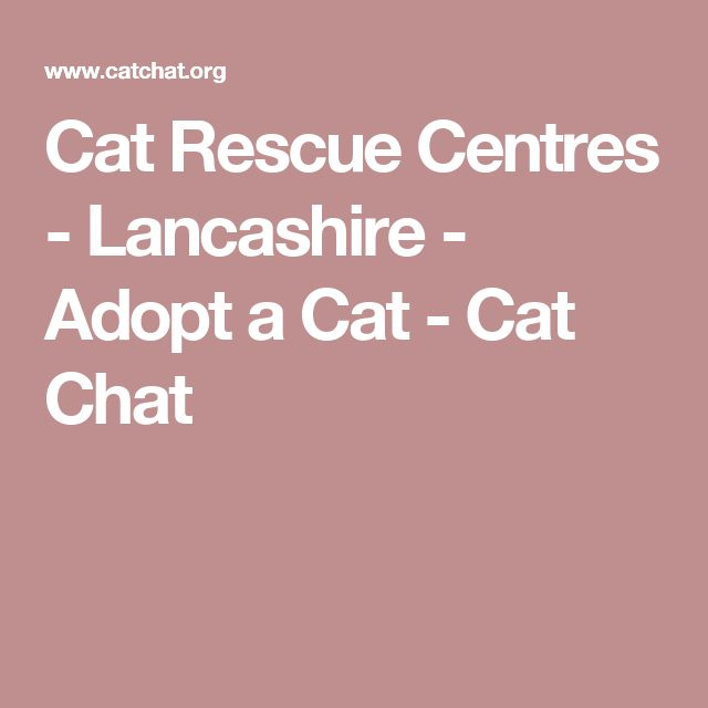 Cat Rescue Centres - Lancashire - Adopt a Cat - Cat Chat