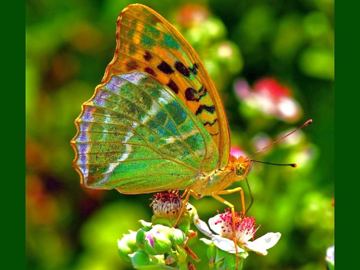 25+ Best Ideas About Beautiful Butterfly Pictures On