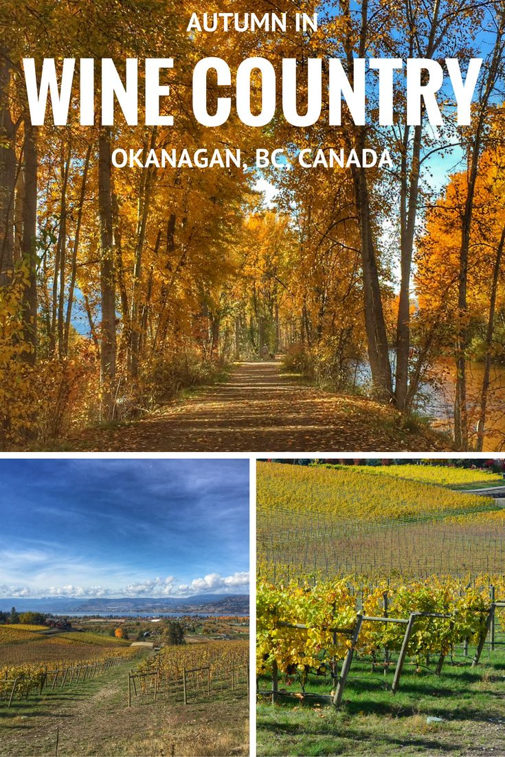 Autumn in the Okanagan Wine Country, BC, Canada