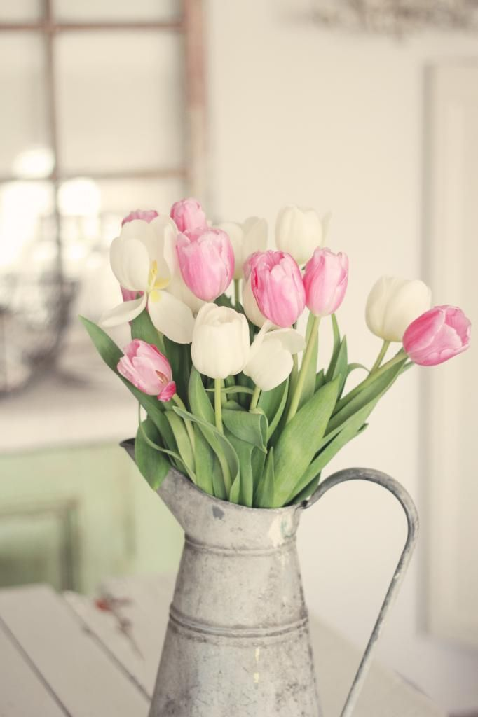 Beautiful pink and white tulips