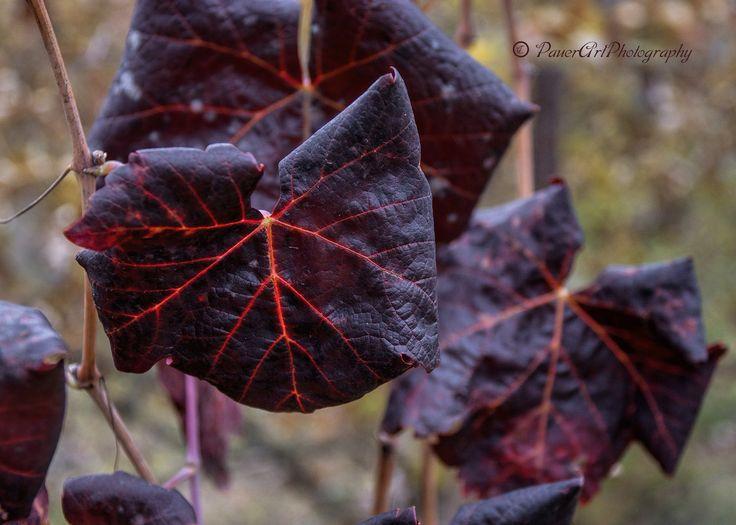 https://flic.kr/p/Nmz6w2 | Autumn  www.emlekkepfotografia.hu