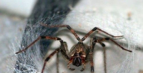 Spider Extermination in Newry and Mourne #Spider #Infestations...