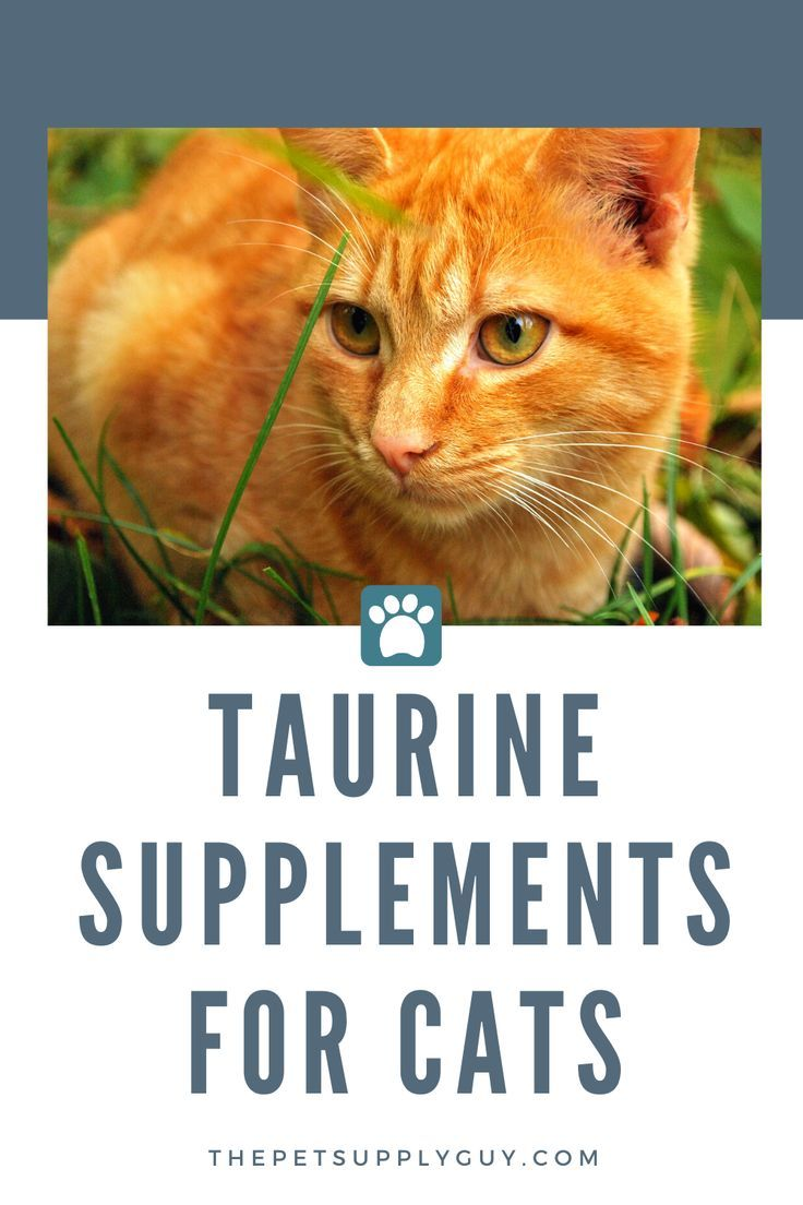 Best Taurine Supplement For Cats The Pet Supply Guy In 2020 Cats Cat Advice Taurine