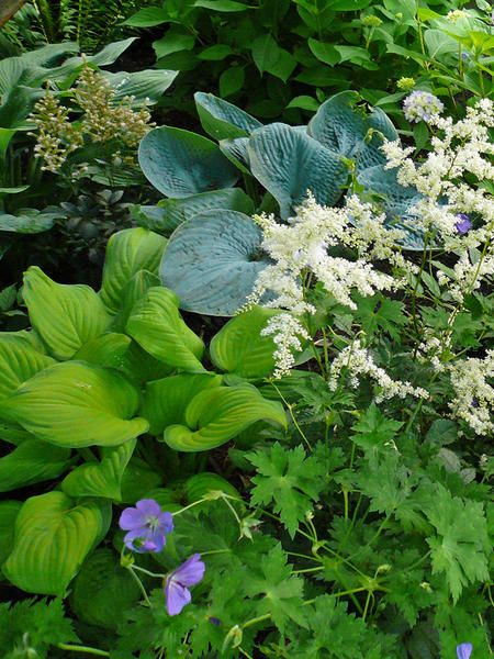 for the shade...hosta, astilbe, perennial geranium