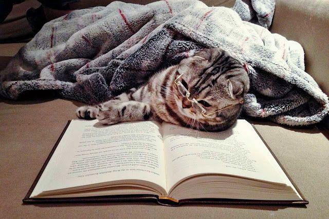 Funny cats - part 74 (35 pics + 10 gifs)