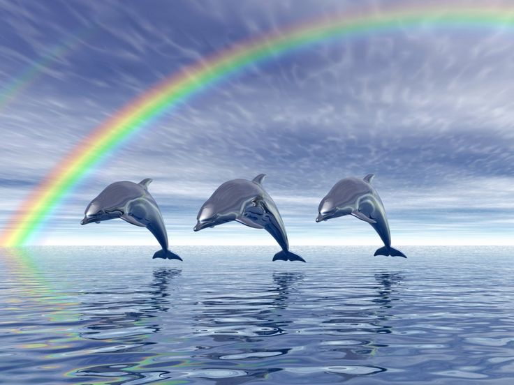 Dolphins with rainbow