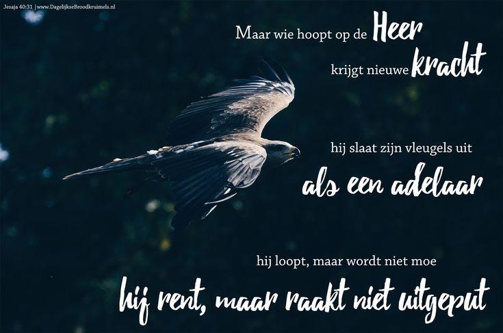 Maar wie hoopt op de HEER krijgt nieuwe kracht: hij slaat zijn vleugels uit als een adelaar, hij loopt, maar wordt niet moe, hij rent, maar raakt niet uitgeput. Jesaja 40:31  #Hoop, #Kracht  https://www.dagelijksebroodkruimels.nl/jesaja-40-31-2/