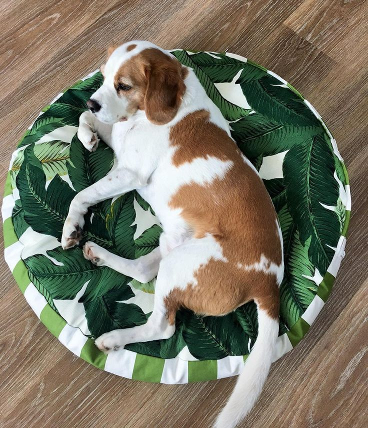 Green and White tropical palm design with green and white stripe sides. Medium 78cm diameter  NOTE: actual colour may vary to computer image  SIze Guide: Medium - 78cm diameter with 10cm sides - ideal for medium dog breeds - ie. beagle, schnauzer, spaniel, small retriever  IF YOUR SIZE IS NOT AVAIL