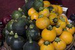 The Best Fertilizers for Squash Plants   eHow
