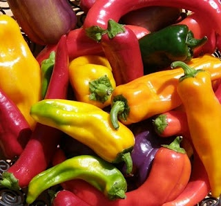 """Patience will pay off with a bountiful pepper harvest. Pictured: Numex Joe E. Parker, Jimmy Nardello, Giant Marconi.  """"Pepper seedlings need to be grown indoors until they have several sets of true leaves, and it's at least 55 degrees at night before you plant them outside."""""""