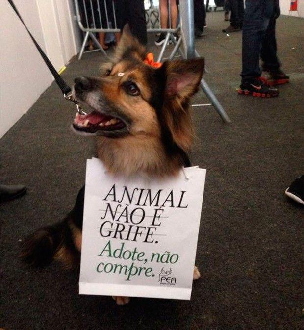 Cachorro no desfile do Ronaldo Fraga (Foto: GNT)