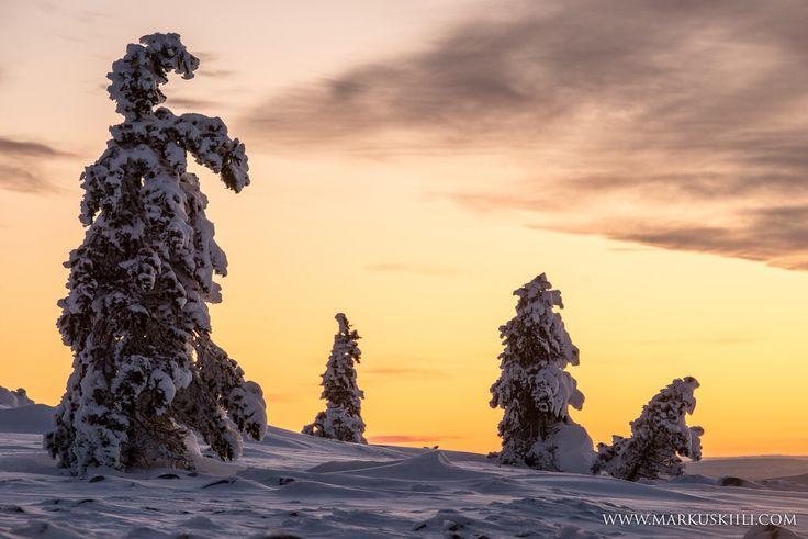 Sunset at Fell Ylläs