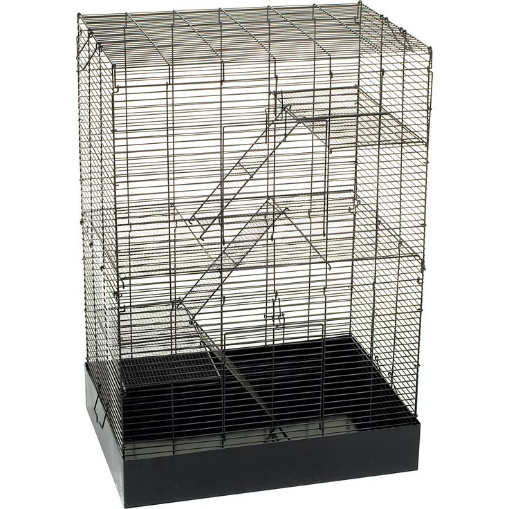 17 Best Images About Rats On Pinterest Sacks Marshalls