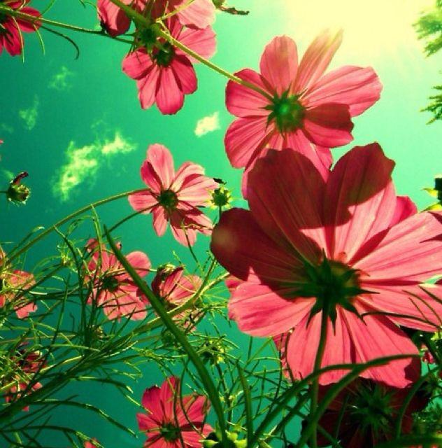 Fotografie, natuur, Bloem, Liefde, Leven, Quote - inspirerend beeld op PicShip.com