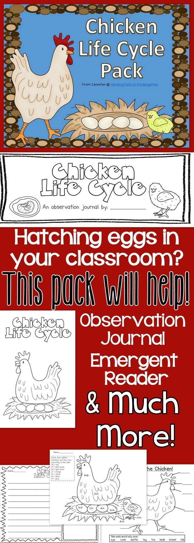 Raising chicks in class? This pack will be a big help for a Chicken Life Cycle unit! Contains a student observation journal, emergent reader, KWL chart, labeling & sequencing pages & much more! #kindergarten #lifecycles #raisingchickens #hatchingeggs #chickens