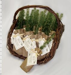 This was my first idea for wedding favors. Probably still going to do this. So adorable, and good for the Earth! Eco-Tree Seedling Favors