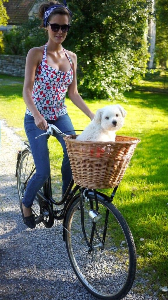 Ultimate Guide: Train Your Dog to Ride in a Bike Basket - Eleanor's | Stylish Bicycle Accessories for Ladies
