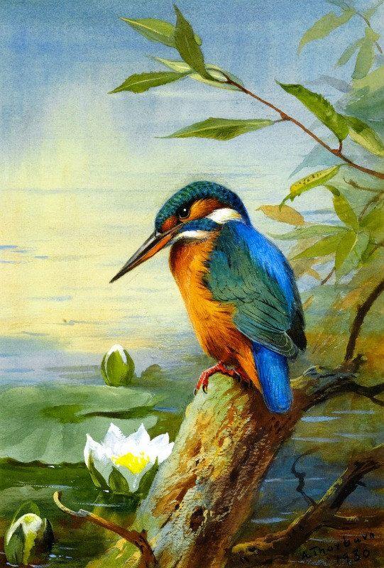 Kingfisher Cross stitch pattern pdf format by diana70 on Etsy