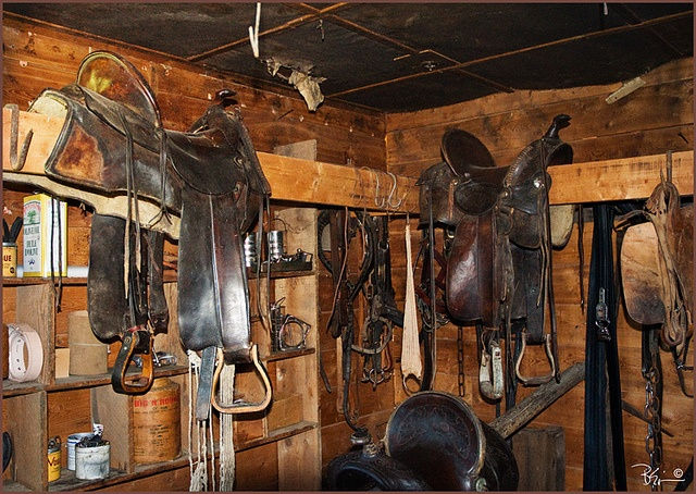 17 Best Images About Saddles On Pinterest Tack Rooms