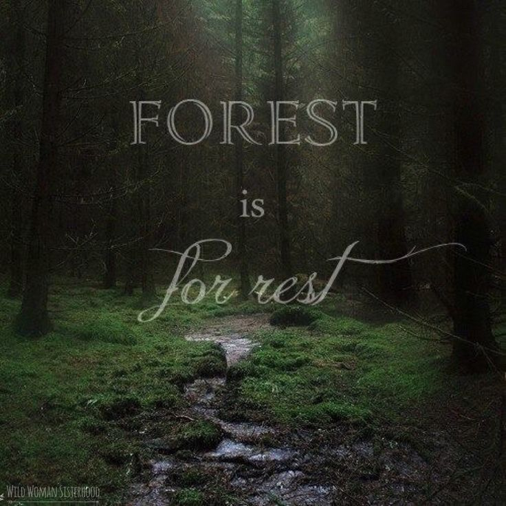 Forest is for rest ... WILD WOMAN SISTERHOODॐ #WildWomanSisterhood…