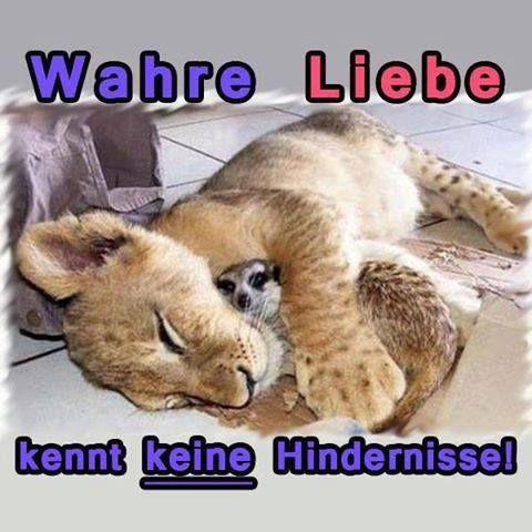 #lol #witzigebilder #funnyshit #instafun #humor #love #sprüchezumnachdenken