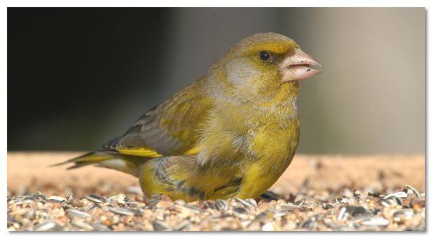 Komt april om de hoek loeren? Stop dan gerust met vogels voeren.