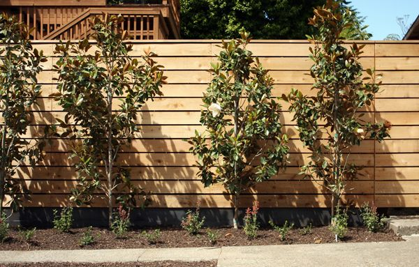 25 Best Images About Modern Fence On Pinterest Fence