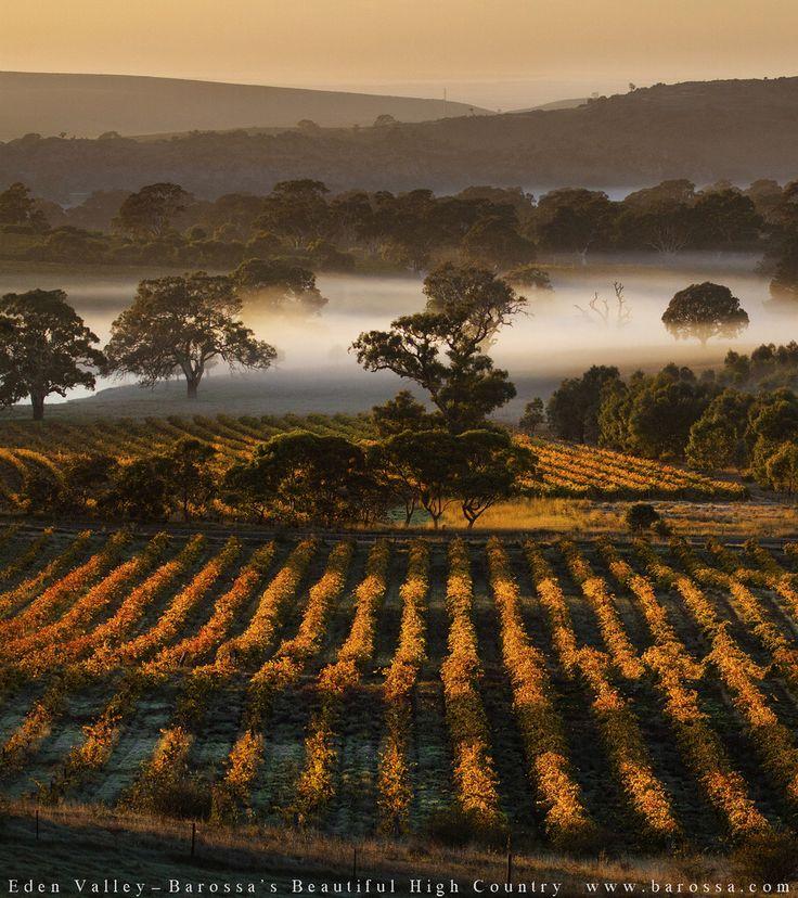 McLaren vale   http://www.viewretreats.com/mclaren-vale-fleurieu-peninsula-luxury-accommodation #travel