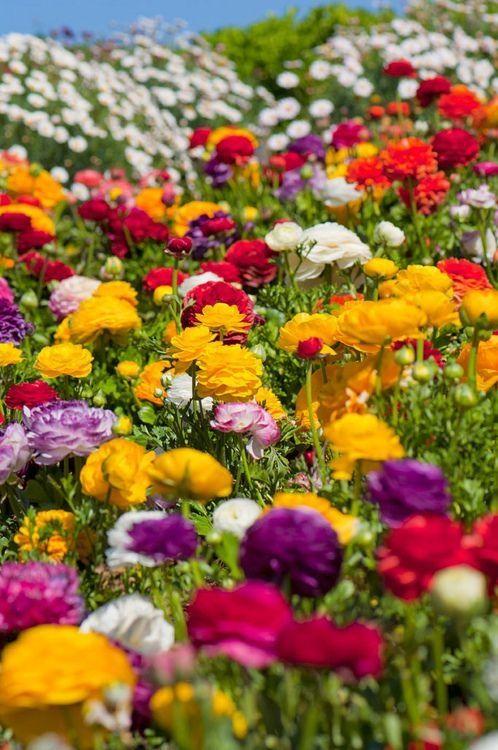 jardines flores campos arco iris al aire libre hermosas flores jardn de color gardens