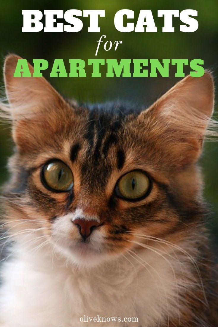 The Best Cats For Apartments Oliveknows Cool Cats Cats Cat Safety