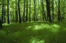 Los bosques templados de frondosas presentan diversos ecosistemas dependiendo de la estacionalidad y humedad del clima.