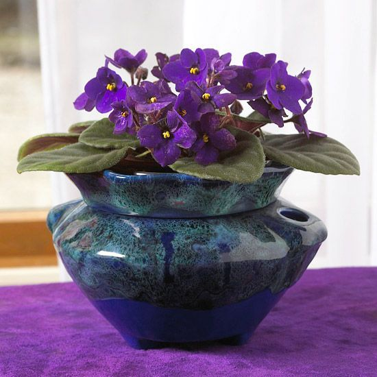 "African violets - easy to grow flowering houseplants - bloom year-round with little effort - likes warm conditions & filtered sunlight. Avoid getting water on the fuzzy leaves; cold water causes unsightly brown spots. Growing Conditions: Medium to bright light; 65-75F; keep soil evenly moist  Size: To 8"" tall &16"" wide"